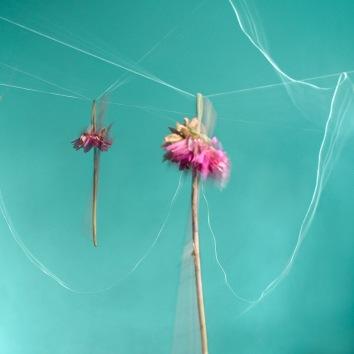 Hannah Arnette--Hanging