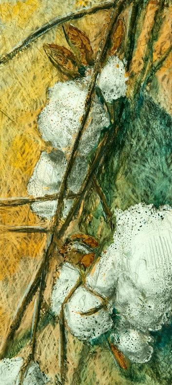 Jake Forthman--Cotton Study